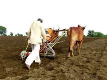 लातूर जिल्ह्यात खरीपाचा पेरा केवळ ८ टक्के