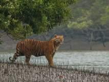 भारतातील 'या' ४ बायोस्फिअर रिझर्व्हमध्ये लपला आहे निसर्गाचा खजिना, एकदा नक्की द्या भेट!