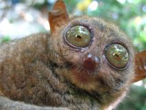 'हे' आहेत जगातील सर्वात विचित्र प्राणी