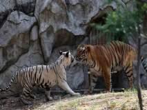 दिल्लीच्या प्राणीसंग्रहालयातील अनोखी लव्ह स्टोरी
