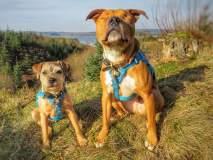 कुत्र्यांची दिल-दोस्ती-दुनियादारी; डोळे नसलेल्या एमससाठी टॉबी झाला 'मितवा'!