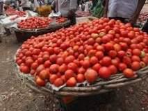 वाशिम येथील बाजारात टोमॅटोचे दर घसरले;कवडीमोल दरात विकावा लागत आहेमाल
