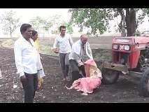 VIDEO: धक्कादायक! शेतीच्या वादातून मुलाने वृद्ध आईला ट्रॅक्टरखाली लोटलं