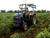 शेतक-याने उभ्या कपाशीतच फिरविला ट्रॅक्टर, धामणगाव तालुक्यातील प्रकार