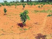 बाटलीद्वारे झाडांना पाणी; वनीकरण विभागाचा उपक्रम