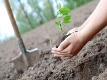 वृक्ष लागवडीवर राज्य सरकार ठेवणार सॅटेलाईटद्वारे 'वॉच'