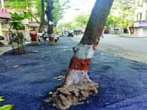 झाडांच्या बुंध्याचेदेखील काँक्रिटीकरण