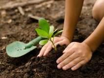 'एक विद्यार्थी-एक वृक्ष'चा अकोला पॅटर्न पोहोचला १३ जिल्ह्यांत!