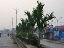 मंत्र्यांच्या दौऱ्याआधी हिंगोलीच्या रस्ता दुभाजकात रात्रीतून लागली झाडे