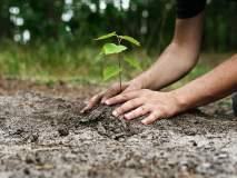 झाड लावा अन् क्वार्टर मिळवा योजना अंगलट, अधिकाऱ्याच निलंबन