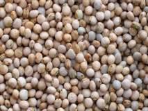 माजलगावात व्यापार्यांकडून कवडीमोल भावाने तूर खरेदी; शेतकरी शासकिय खरेदी केंद्राच्या प्रतीक्षेत