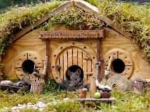 काय सांगता राव, चक्क उंदीर मामासाठी बनवलंय गाव
