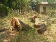 ताथवडे येथील जनावरांची जोपासना करणाऱ्या क्षेत्रात वृक्षांच्या राजरोसपणे कत्तली