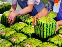 जगातील महागडी पण विचित्र फळं, चौकोनी कलिंगड अन् लाफिंग बुद्धाच्या आकाराचा नासपती