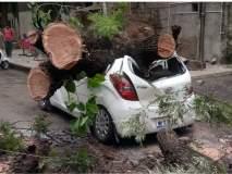 माेटारीवर पडले झाड ; गाडीचे माेठे नुकसान