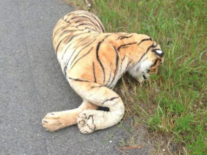 15 tigers death in Vidarbha in 8 months; There is no action | ८ महिन्यांत विदर्भात १५ वाघांचा मृत्यू; कारवाई कुणावरच नाही