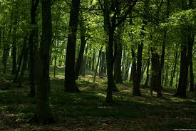 State Forest Department gets vacant posts; 1006 'additional charges' | राज्यातील वन खात्याला रिक्तपदांनी पोखरले; १००६ पदांचा 'अतिरिक्त प्रभार'