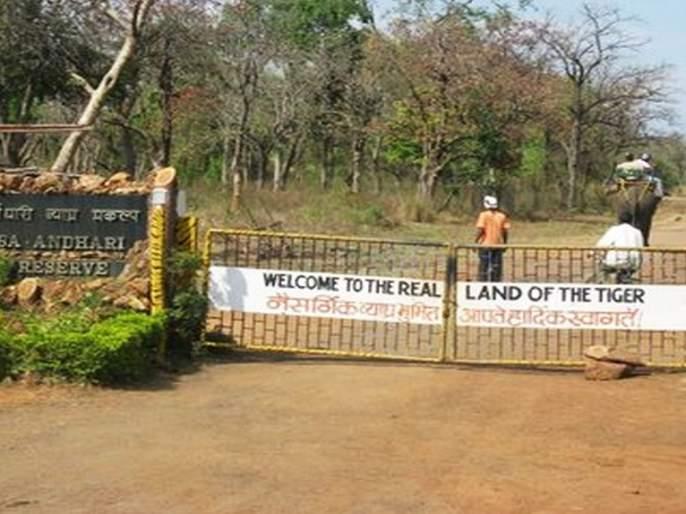 In Tadobae Andheri Tiger Reserve, the gender parity was denied by the work | ताडोबा अंधारी व्याघ्र प्रकल्पात लिंगभेद करून कामाची समानता नाकारली