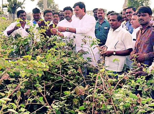 Submit cases to Bt seed companies | बीटी बियाणे कंपन्यांवर गुन्हे दाखल करा