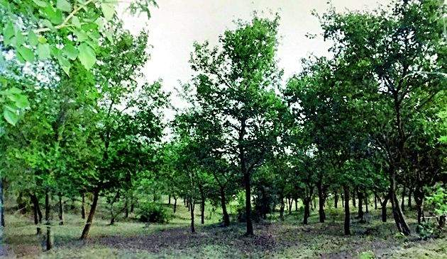 Successful use of tree plantation and pond construction | वृक्ष लागवड व तलाव बांधकामाचा यशस्वी प्रयोग