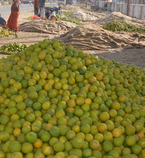 The price of Citrus limetta will go up to 40 thousand | मोसंबीचा दर ४० हजारांवर जाणार