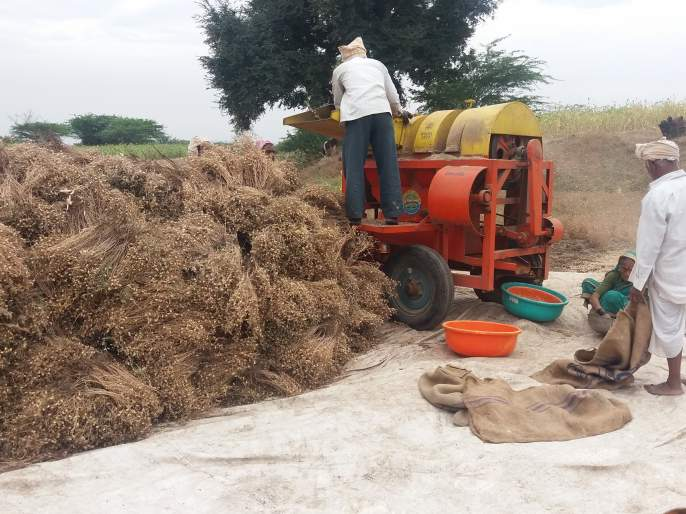 Satara: Due to cloudy weather in Khatav taluka, crops are threatened, farmers get rid of crops | सातारा : खटाव तालुक्यात ढगाळ वातावरणामुळे पिकांना धोका, शेतकरी पिकं काढण्यात मग्न