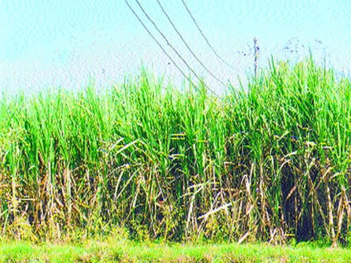 Vasayak prepares for payment of exhausted commodity contracts: Sugar Deputy President | वसाकाने थकविली ऊसतोडणी ठेकेदारांची देयके आंदोलनाची तयारी : साखर उपआयुक्तांकडे दाद