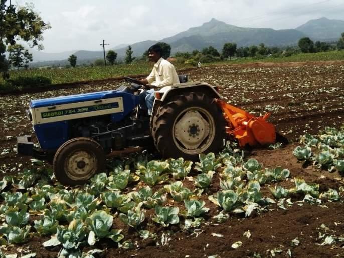 Rotor rotated on one acre cabbage crop   एक एकर कोबी पिकावर फिरविला रोटर