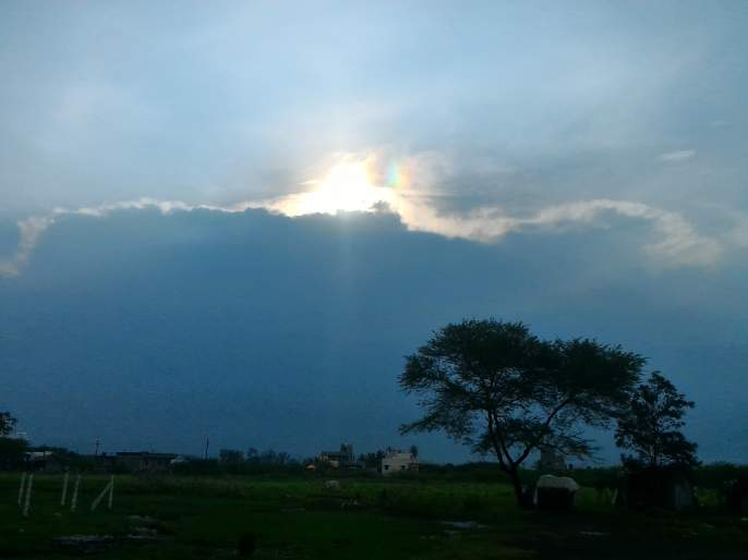 Cloudy weather, possibility of growing cholesterol in Sindhudurg district, increase in cholera epidemic   ढगाळ वातावरण, पावसामुळे सिंधुदुर्ग जिल्ह्यात तुडतुड्यांची पैदास, करपा रोगाची वाढ होण्याची शक्यता