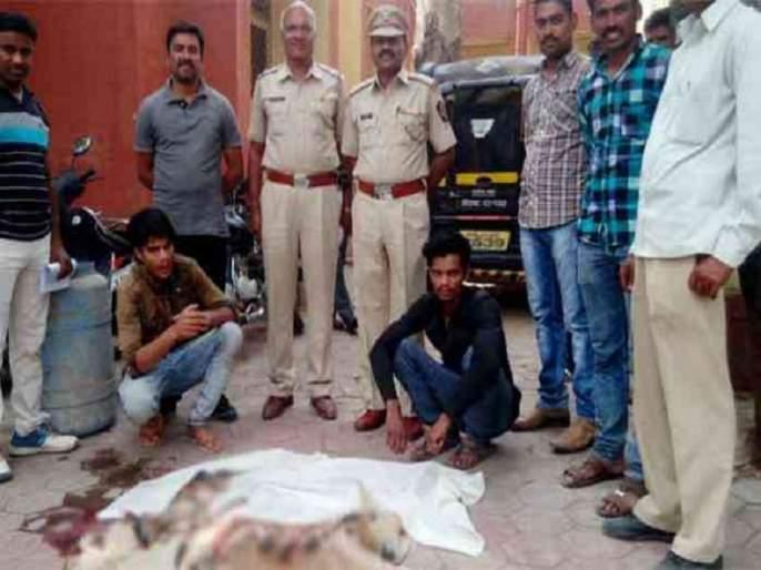 Two siblings arrested for the hunting of pregnant deer by the Aurangabad police | गर्भवती हरणाची शिकार करणार्या दोन भावंडांना औरंगाबाद पोलिसांकडून अटक