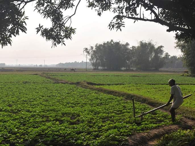 The state's agriculture is fragile! Agricultural production depleted   राज्याच्या शेतीची प्रकृती नाजूक! कृषी उत्पादन घटले