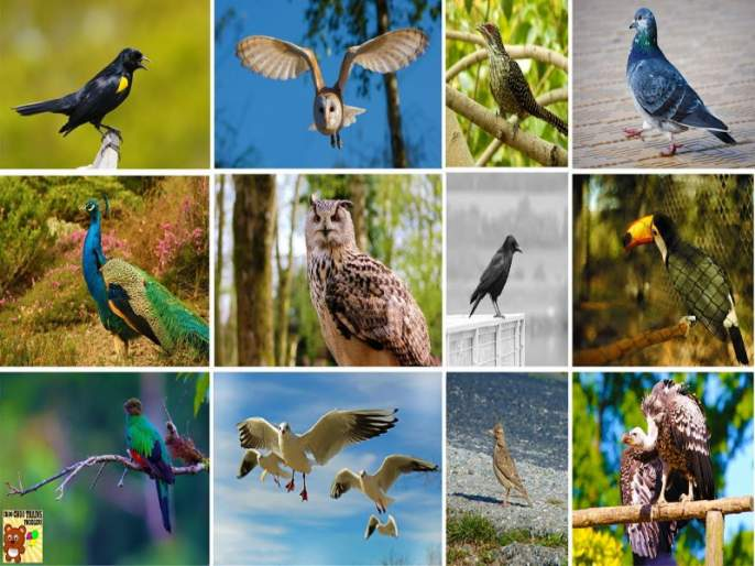 needs birds Diversity : Anil Mahajan | पक्षी वैविध्य जपण्याची गरज : अनिल महाजन