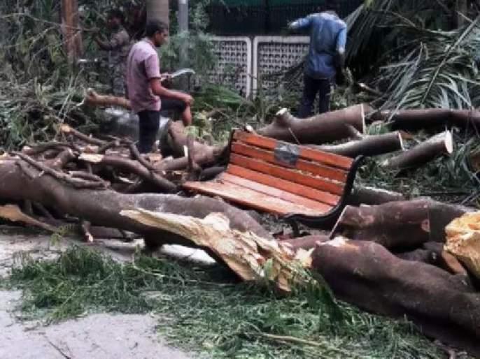 Women killed in Chembur, trees collapse | चेंबूर येथे अंगावर झाड कोसळून महिला ठार, पालिकेची 'ढकलेगिरी'
