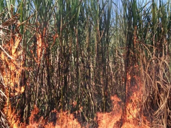 Due to shortcircuit in Dehu, two acres of sugarcane burns; 4 lakhs loss | देहूगावात विद्युतवाहक तार तुटल्याने दोन एकरावरील ऊस जळून खाक; ४ लाखांचे नुकसान
