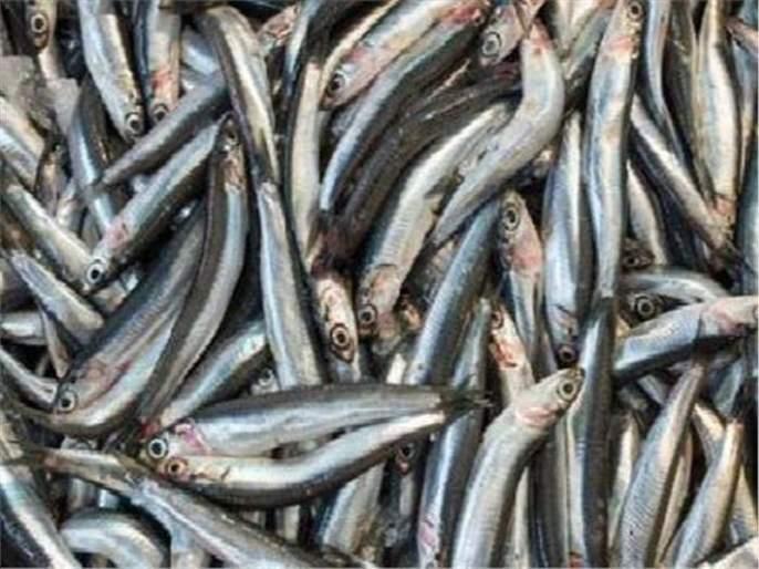 Demand for disposal of fishery waste in the northern part of the district | उत्तन भागात निर्माण होणाऱ्या मत्स्य कचऱ्याची विल्हेवाट लावण्याची मागणी