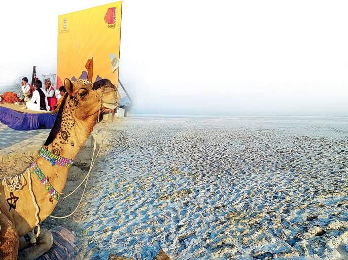 The complete desert ... the sweet desert of Gujarat from Kutch | पाचूचं वाळवंट...गुजरातच्या कच्छमधील मिठाचं वाळवंट