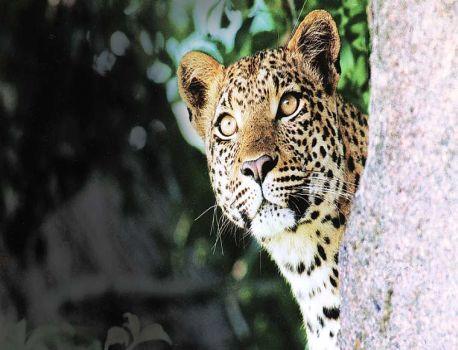 Avoid encroachments on forests | वनांवरील अतिक्रमण टाळा