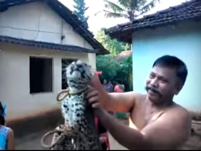 in Sawantwadi terrible torture of baby leopard | Video-सावंतवाडीत बिबट्याच्या बछड्याचा अमानुष छळ, प्राणी मित्रांना संताप अनावर