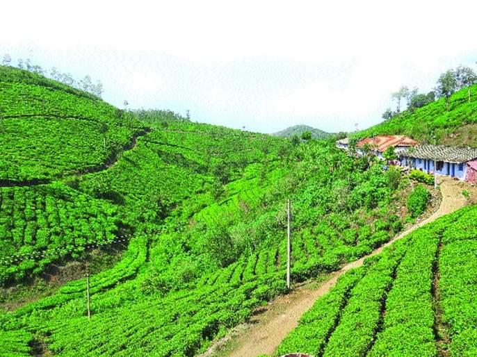 Nature 'gift' Kerala | निसर्गाची 'भेट' केरळ