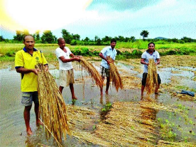 Farmers-fishermen hit the area, resulting in 2 thousand 366.54 hectare area   शेतकरी-मच्छीमारांना ओखीचा फटका, २ हजार ३६६.५४ हेक्टर क्षेत्रावर परिणाम