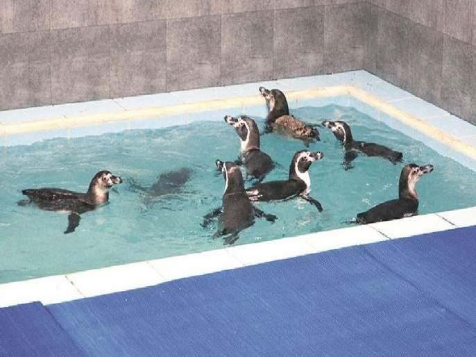 Newcomers to come along with Penguins; The queen's garden will return to the old glory | पेंग्विनच्या सोबतीला येणार नवे पाहुणे; राणीच्या बागेचे जुने वैभव परतणार