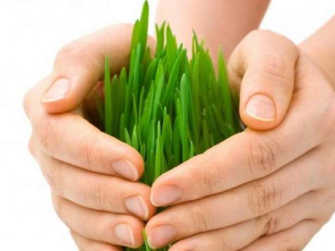 Crop insurance | पीक विमा