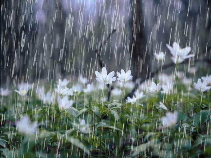 The state has four days of good rains, the highest rainfall in Konkan | राज्यात चार दिवस चांगल्या पावसाचा अंदाज, कोकणात अतिवृष्टी
