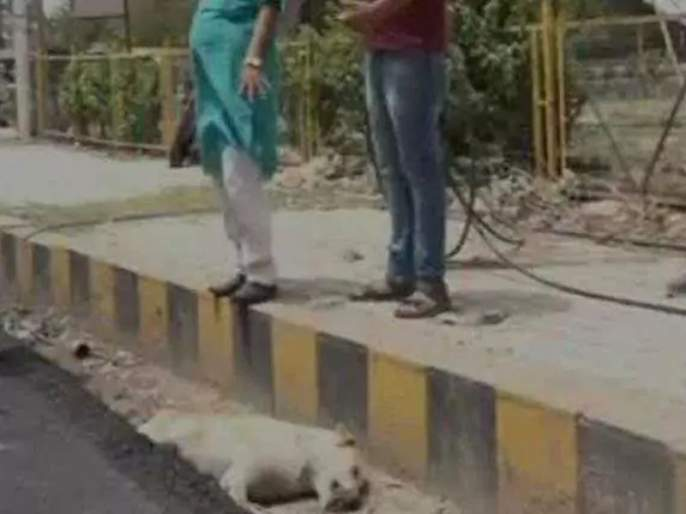 Road Built Over Dogs Body In Agra It Was Alive Allege Residents   असंवेदनशीलतेचा कळस! रस्त्याचं बांधकाम करताना कुत्र्यावर ओतलं डांबर
