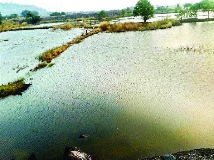 Protected dams break salt water in the soil   संरक्षक बांध फोडून शेतजमिनीत खारे पाणी