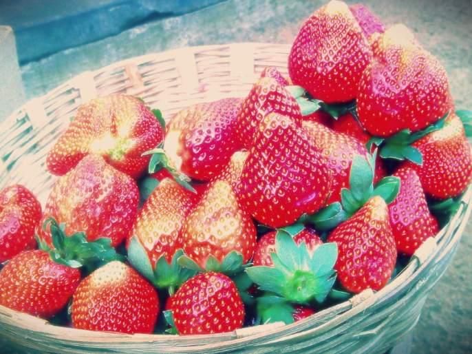 Strawberry season effloresce due to cold season... 30 to 40 percent increase rates In Pune | थंडीमुळे बहरला स्ट्रॉबेरीचा हंगाम... पुण्यात आवक वाढली; दरामध्ये ३० ते ४० टक्क्यांची वाढ