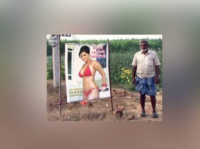 Quantity of Farmer's Future; Photo of Sunny Leone's Bikini photos, which are not applicable to the crops | शेतकऱ्याची सण'सनी'त मात्रा; पिकांना दृष्ट लागू नये म्हणून लावला सनी लिओनीचा बिकिनीतील फोटो