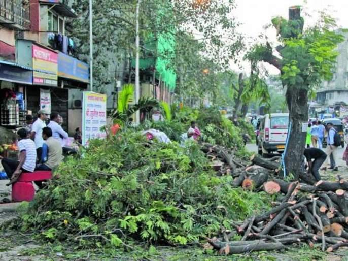 Bombay HC wants wider publicity to be given by BMC on tree cutting proposals it receives | ..अन्यथा मुंबईतील वृक्षतोडीस स्थगिती; उच्च न्यायालयाची महापालिकेला तंबी