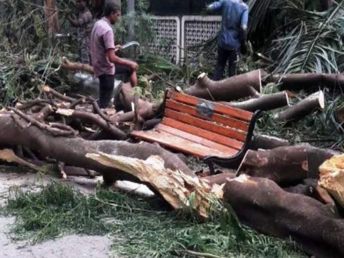 Mumbai: Unfortunate death of a woman in Chembur due to tree collapse | मुंबई: चेंबूरमध्ये झाड अंगावर कोसळून एका महिलेचा दुर्दैवी मृत्यू