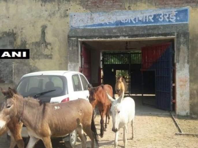 Police arrest donkeys for destroying plants in Uttar Pradesh | अजब ! फुलांचं नुकसान केल्याने पोलिसांनी गाढवांनाच केली अटक, चार दिवस कारागृहात ठेवलं डांबून